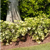 Sarasota Mulching Service Near Me Prevent Weeds Soil